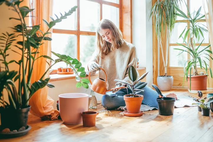 prendre soin des plantes d'intérieur